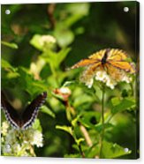 Wings And Blooms Acrylic Print