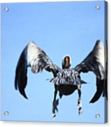 Wings In Position And Flaps Down Acrylic Print