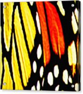 Wings Of A Monarch Butterfly Abstract Acrylic Print