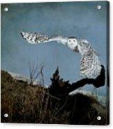 Wings Of Winter Acrylic Print