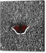 Wings On Grass Acrylic Print