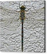 Wings On Stucco Acrylic Print