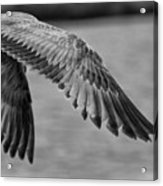Wings Over Water Beach Pictures Black And White Seagull Acrylic Print