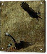 Wings Spread Wide Acrylic Print