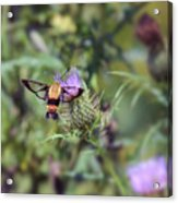 Wings You Can See Through Acrylic Print