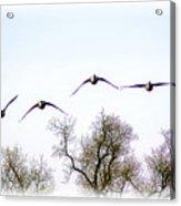 Wingspread Acrylic Print