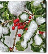 Winter - Ice Coated Holly Acrylic Print