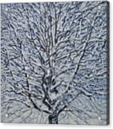 Winter '05 Acrylic Print by Leah  Tomaino