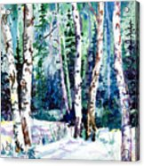 Winter Aspen Acrylic Print