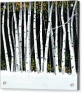 Winter Aspens II Acrylic Print