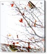 Winter Birds 1 Acrylic Print