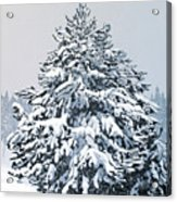 Winter Blanket Acrylic Print