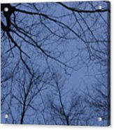 Winter Blue Sky Acrylic Print