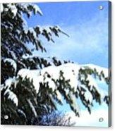 Winter Boughs Acrylic Print