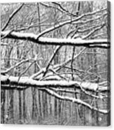 Winter Branches Acrylic Print