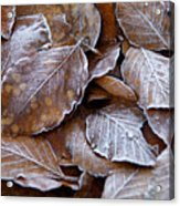 Winter Brown Leaves Powdered With Frost Acrylic Print