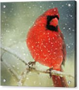 Winter Card Acrylic Print