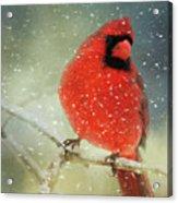 Winter Card Acrylic Print
