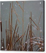 Winter Cat Tail Acrylic Print