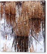 Winter Cattails Acrylic Print