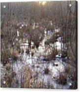 Winter Color Of A Wetland Acrylic Print