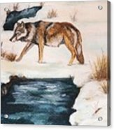 Winter Coyote Acrylic Print