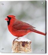 Winter Day Cardinal Acrylic Print