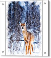 Winter Deer 1 Acrylic Print
