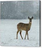 Winter Deer Walk Acrylic Print