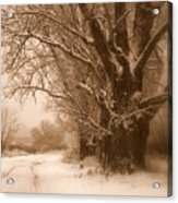 Winter Dream Acrylic Print