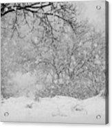 Winter Dream Acrylic Print