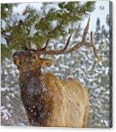 Winter Edibles Acrylic Print