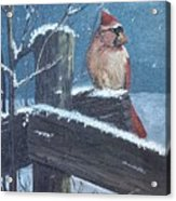 Winter Female Cardinal Acrylic Print