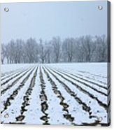 Winter Field Acrylic Print
