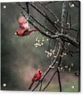 Winter Flight  Acrylic Print by Kim Loftis