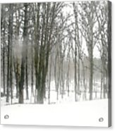 Winter Fog Acrylic Print