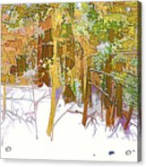 Winter Forest 1 Acrylic Print