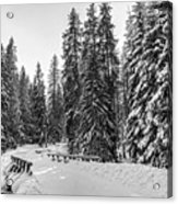 Winter Forest Journey Acrylic Print