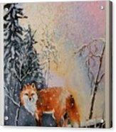 Winter Fox Acrylic Print