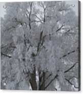 Winter Frost Acrylic Print