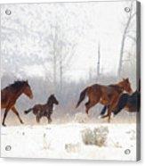 Winter Gallop Acrylic Print