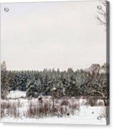 Winter Glade Under Snow. Acrylic Print