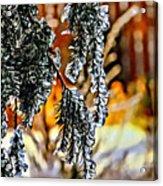 Winter Glow Acrylic Print