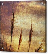 Winter Gold Acrylic Print