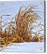 Winter Grasses Acrylic Print