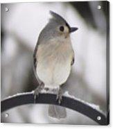 Winter Gray - Bird Acrylic Print