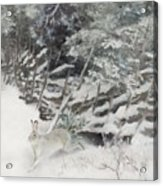 Winter Hare At The Fence Acrylic Print