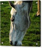 Winter Horse 4 Acrylic Print