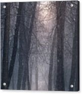 Winter Hush Acrylic Print