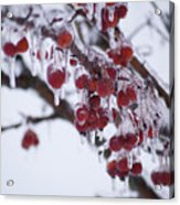 Winter Ice Berries Acrylic Print